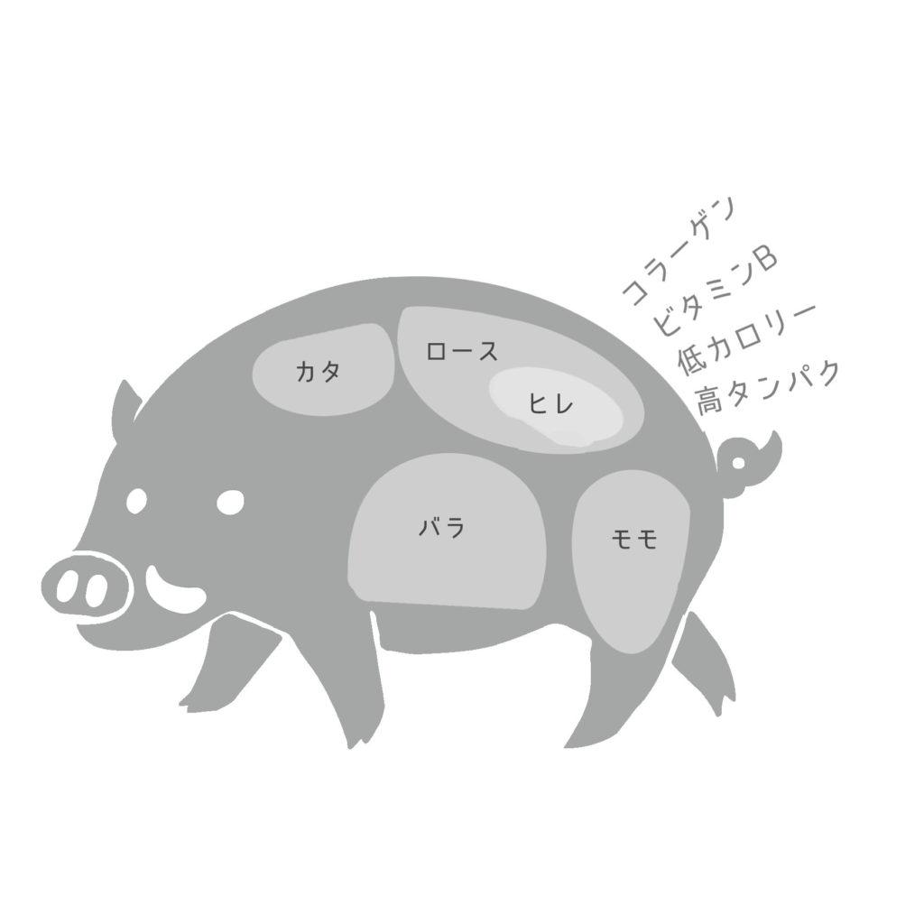 肉の部位イラスト